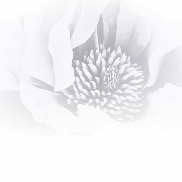 Floral / Botanical / Fruit